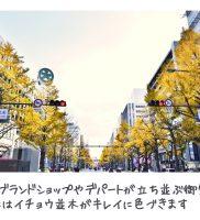 ウィズ心斎橋 周辺情報(御堂筋のイチョウ並木)